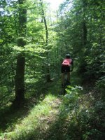 ciciway laengster singletrail im naturparkthal 18 20140415 1103544541