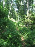 ciciway laengster singletrail im naturparkthal 31 20140415 1262164292